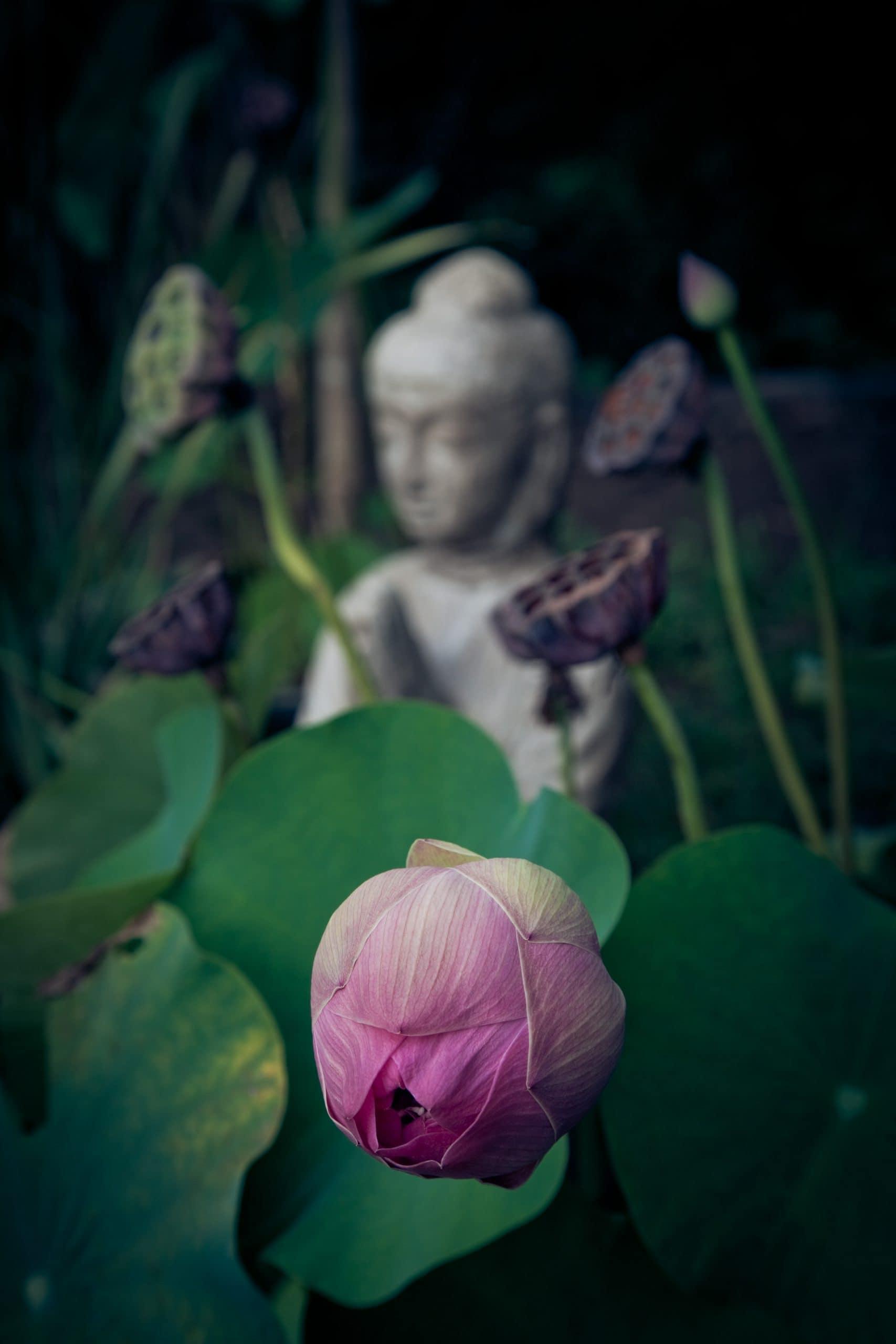 peaceful buddha statue
